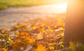 fall leaves depression